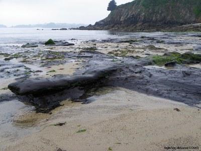 photographie d'une plage avec de la tourbe au sol